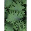 semillas de kale bolshoi