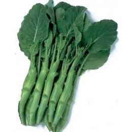 Kailaan blanco - semillas sin tratamiento