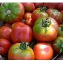 semillas ecológicas de tomate esquena verd