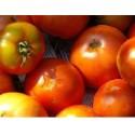 semillas ecológicas de tomate tírvia