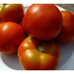 semillas ecológicas de tomate pometa