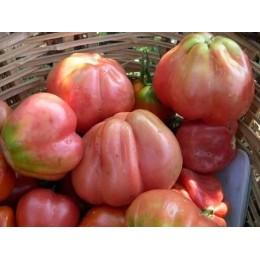 semillas ecológicas de tomate pera rosa de Girona
