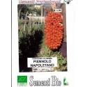 semillas ecológicas de tomate piennolo napolitano