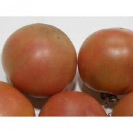 tomate de colgar son gil (semillas ecológicas)
