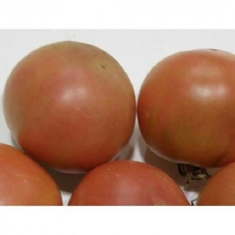 semillas ecológicas de tomate de son gil
