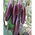 semillas ecológicas de berenjena little fingers