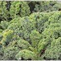kale westland
