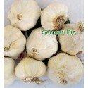 ajo blanco de siembra garcua - ecologico