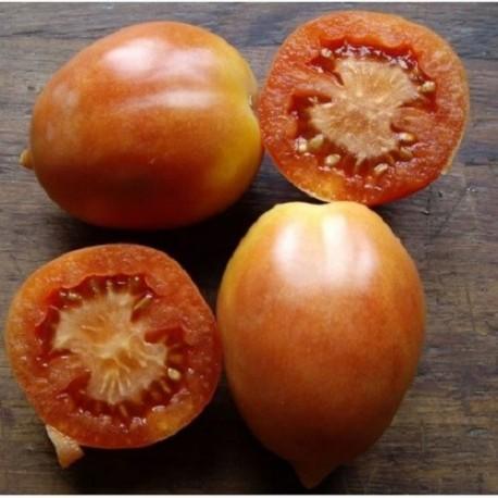 tomate Saint Michel semillas ecológicas