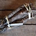semillas de bardana japonesa takinowaka