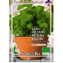 semillas ecológicas de albahaca genovese