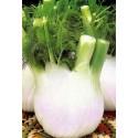 hinojo blanco extra 120 dias semillas ecológicas