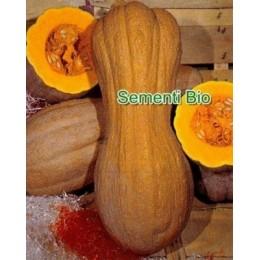 calabaza butternut lisa semillas ecologicas