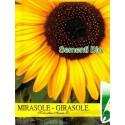 semillas ecológicas de girasol bioseme
