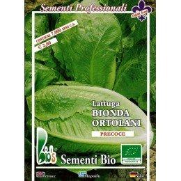 lechuga Romana de verano semillas ecológicas certificadas