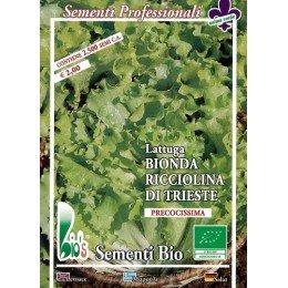 lechuga ricciolina di Trieste semillas ecológicas