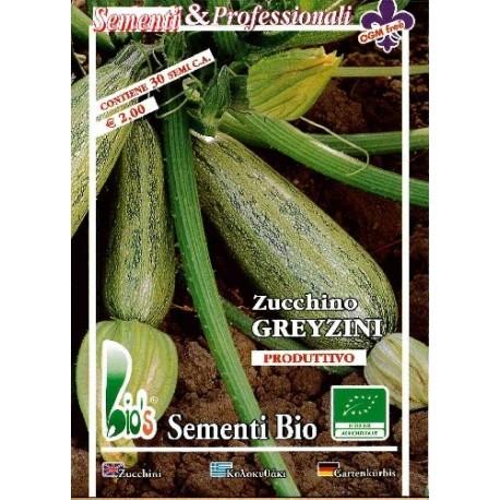 semillas de calabacin greizyni