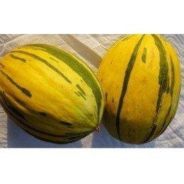 melón de Alozaina semillas ecológicas