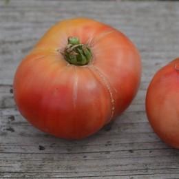tomate cherokee purple semillas ecologicas