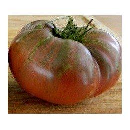 plantel de tomate Barlow japones