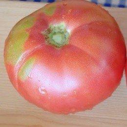 plantel de tomate caspienne rose