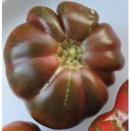 tomate pink Berkeley Tie Dye - plantel
