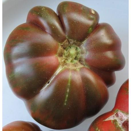 plantel de tomate Berkeley Tie Dye