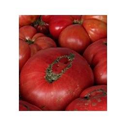 plantel de tomate Brandywine