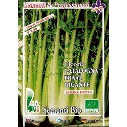 achicoria catalogna gigante dentada - semillas ecológicas