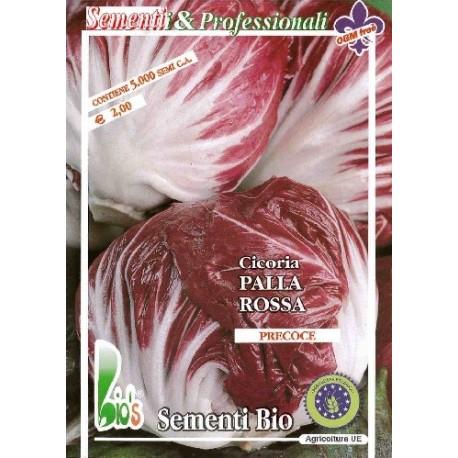 semillas ecológicas de achicoria rossa a palla