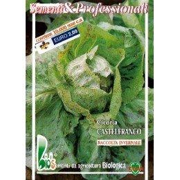 achicoria de Castelfranco semillas ecológicas
