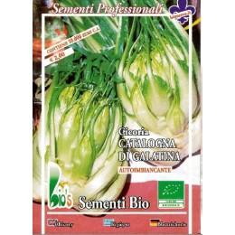 achicoria catalogna puntarelle di galatina semillas ecológicas