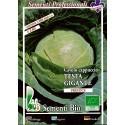 repollo de cabeza gigante ditmasker- semillas ecológicas