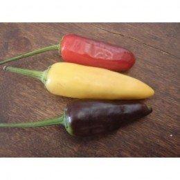 pimiento picante de la Republica, semillas ecológicas