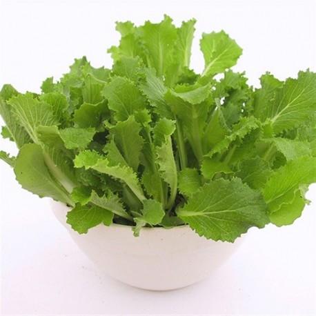 col china pe tsai - semillas ecológicas