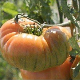 tomate ananas - semillas ecológicas