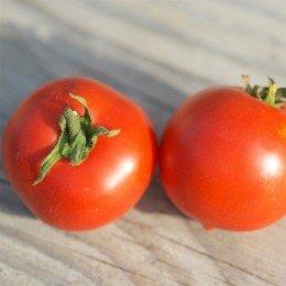 tomate budai torpe - semillas ecológicas