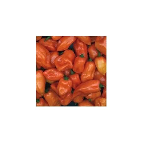 semillas de pimiento habanero naranja
