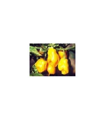 semillas de pimiento habanero amarillo