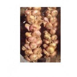 cebolla de cornet - semillas ecológicas