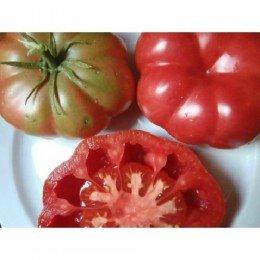 tomate rosa de Mura semillas ecológicas
