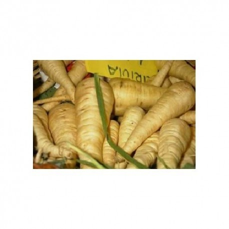 chirivia (pastinaca sativa) semillas ecologicas