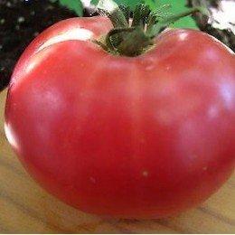 tomate rosa de Berna (semillas ecológicas)