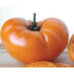 tomate yellow Brandywine - grappa gialla