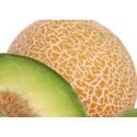 plantel de melón cantalupo