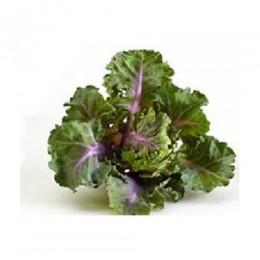 plantel de flower sprouts (col bruselas + kale)