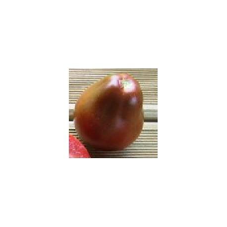 plantel de tomate japones