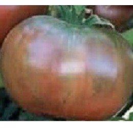 tomate cherokee chocolate (plantel ecológico)