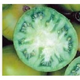tomate evergreen (plantel ecológico)