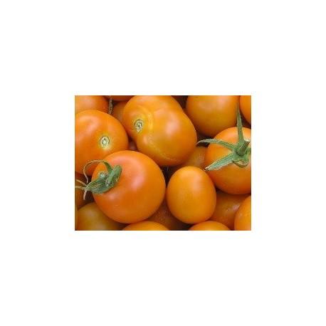 semillas de tomate jaume flamme